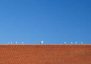 Protect Roof From Birds